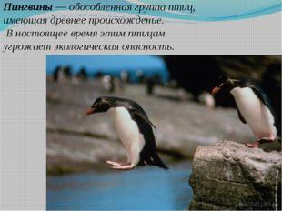 Пингвины — обособленная группа птиц, имеющая древнее происхождение. В настоящ
