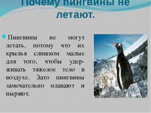 Почему пингвины не летают. Пингвины не могут летать, потому что их крылья сли