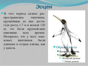 Эоцен В этот период сильно рас-пространились пингвины, крупнейшие из них дост