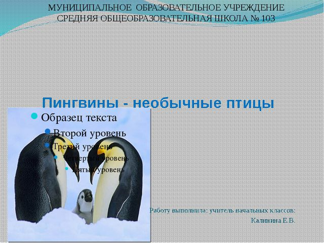 Пингвины - необычные птицы Работу выполнила: учитель начальных классов: Кали...