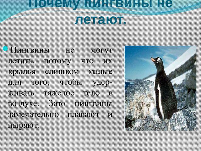 Почему пингвины не летают. Пингвины не могут летать, потому что их крылья сли...
