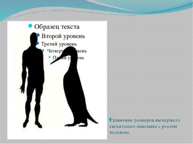 Сравнение размеров вымершего гигантского пингвина с ростом человека