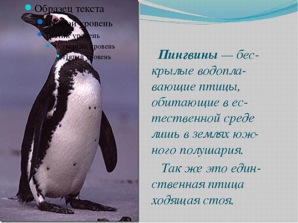 Пингвины — бес-крылые водопла-вающие птицы, обитающие в ес-тественной среде...