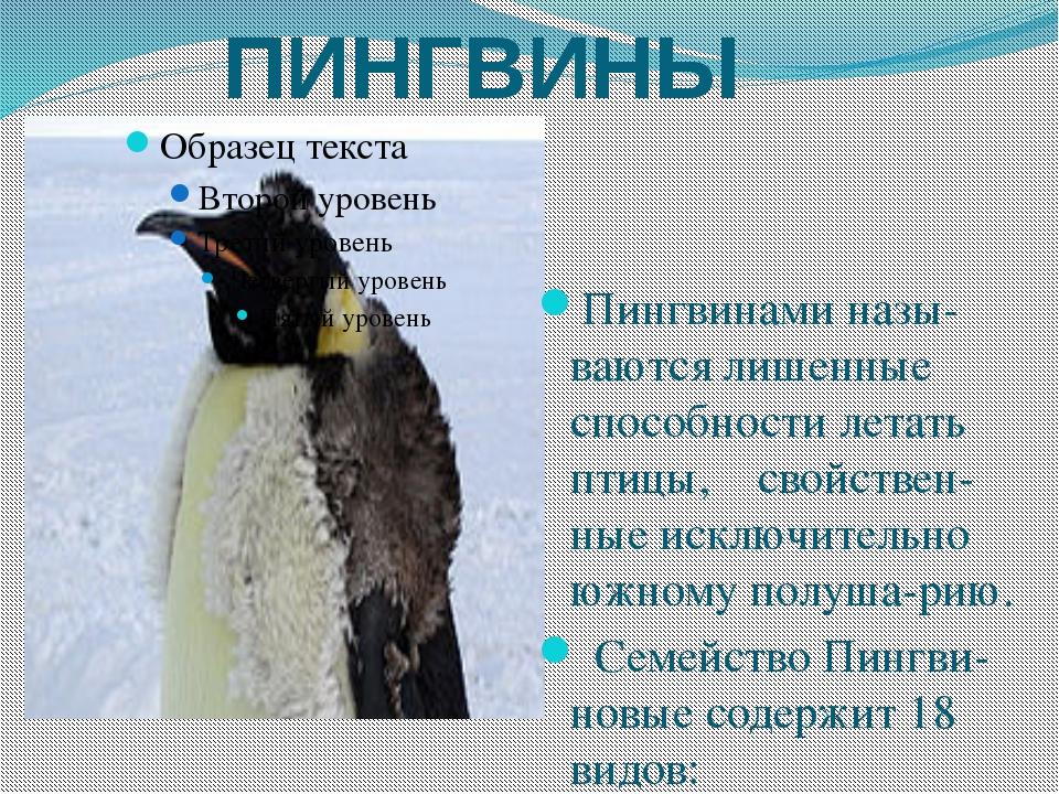 ПИНГВИНЫ Пингвинами назы-ваются лишенные способности летать птицы, свойствен-...