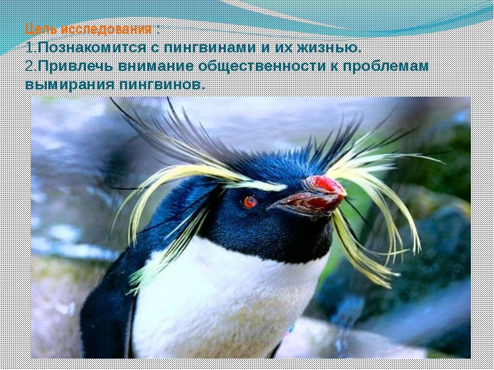 Цель исследования : 1.Познакомится с пингвинами и их жизнью. 2.Привлечь внима...