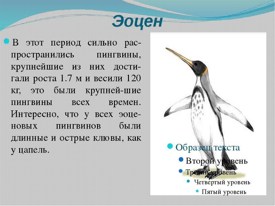Эоцен В этот период сильно рас-пространились пингвины, крупнейшие из них дост...