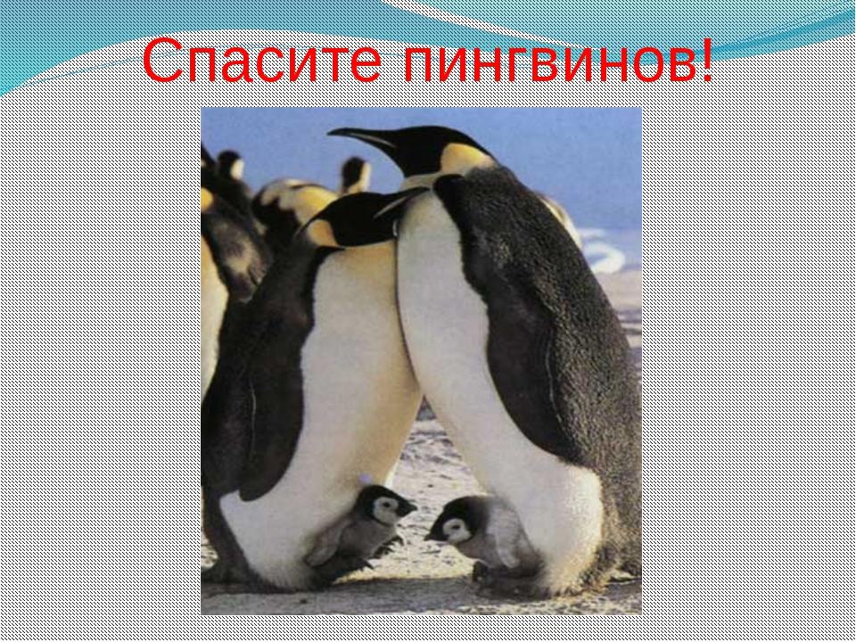 Спасите пингвинов!