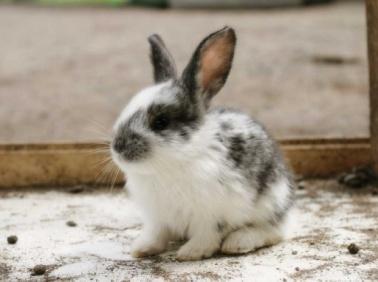 D:\123\rabbit.jpg