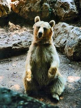 D:\123\bear.jpg