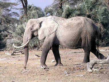 D:\123\elephant.jpg