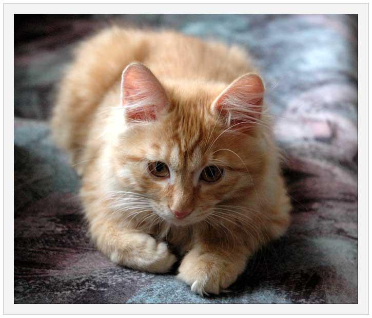 D:\123\cat.jpg