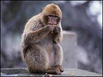 D:\123\monkey.jpg