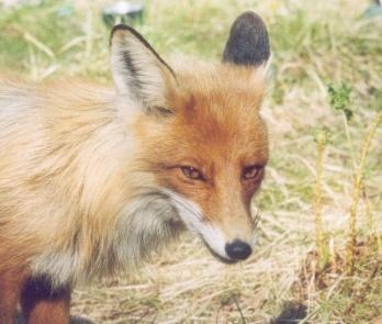 D:\123\fox.jpg