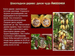 Шоколадное дерево: дикое чудо Амазонки Какао-дерево -единственный источник шо