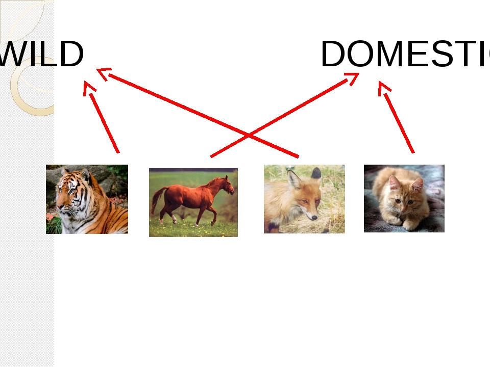 WILD DOMESTIC