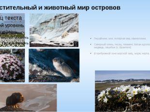 Растительный и животный мир островов Лишайники, мхи, полярная ива, камнеломка