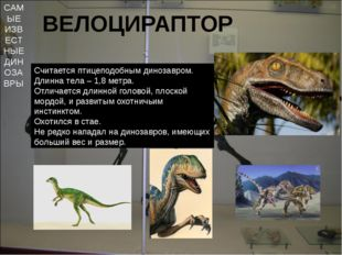 САМЫЕ ИЗВЕСТНЫЕ ДИНОЗАВРЫ ВЕЛОЦИРАПТОР Считается птицеподобным динозавром. Дл