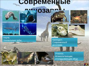 Современные динозавры Акула. Уникальные зубы. Крокодил. Современный динозавр.