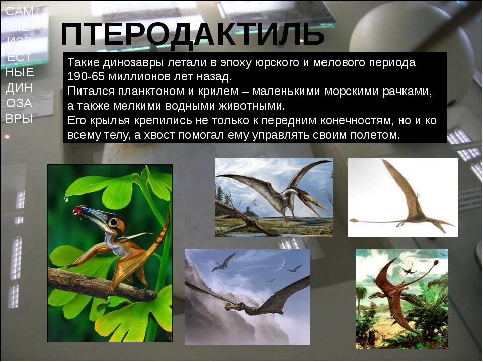 САМЫЕ ИЗВЕСТНЫЕ ДИНОЗАВРЫ ПТЕРОДАКТИЛЬ Такие динозавры летали в эпоху юрского...