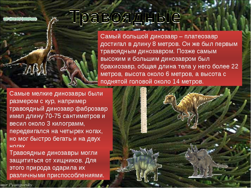 Самые мелкие динозавры были размером с кур, например травоядный динозавр фабр...