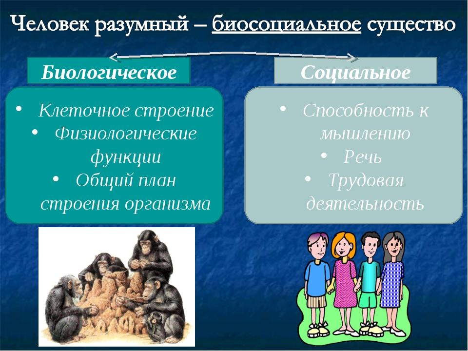 Клеточное строение Физиологические функции Общий план строения организма Спос...