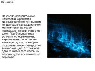 Невероятно удивительные ночесветки. Организмы Noctiluca scintillans при высок