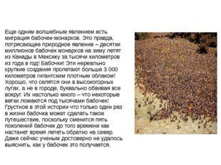 Еще одним волшебным явлением есть миграция бабочек-монархов. Это правда, потр