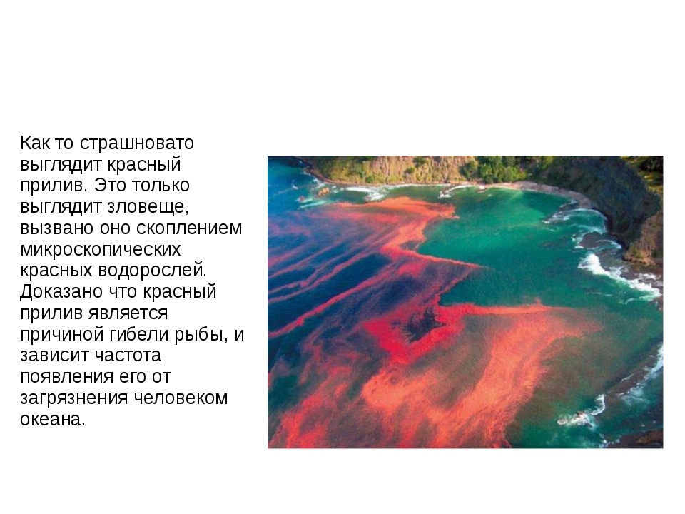 Как то страшновато выглядит красный прилив. Это только выглядит зловеще, вызв...