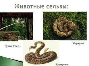 Жарарака Бушмейстер Гремучник