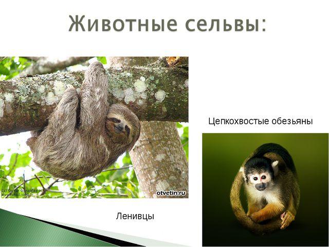 Цепкохвостые обезьяны Ленивцы