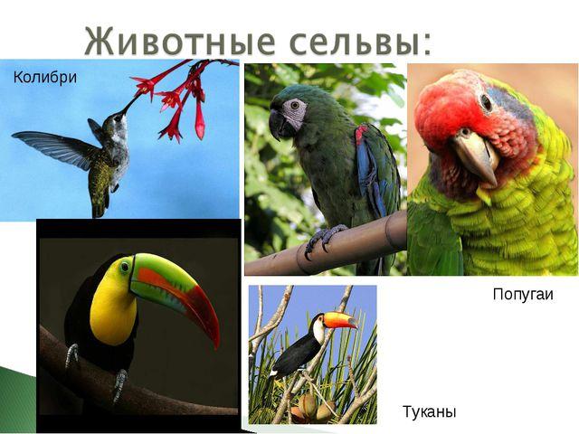 Попугаи Туканы Колибри