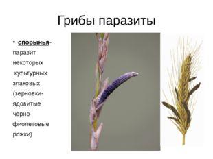 Грибы паразиты спорынья- паразит некоторых культурных злаковых (зерновки- ядо