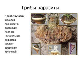 Грибы паразиты гриб-трутовик – мицелий проникает в древесину, пьет все питате