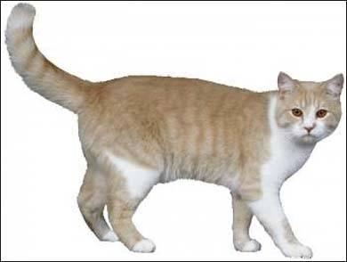 http://pynokio.narod.ru/cat.jpg