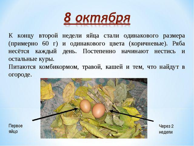 К концу второй недели яйца стали одинакового размера (примерно 60 г) и одинак...