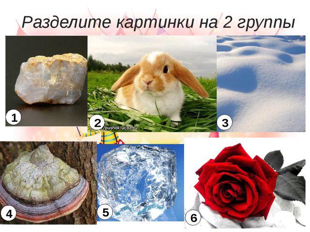 Разделите картинки на 2 группы 1 2 3 4 5 6