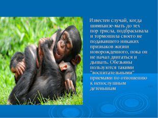 Известен случай, когда шимпанзе-мать до тех пор трясла, подбрасывала и тормо