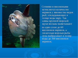 Сотнями и миллионами исчисляется количество икринок у множества видов рыб, о