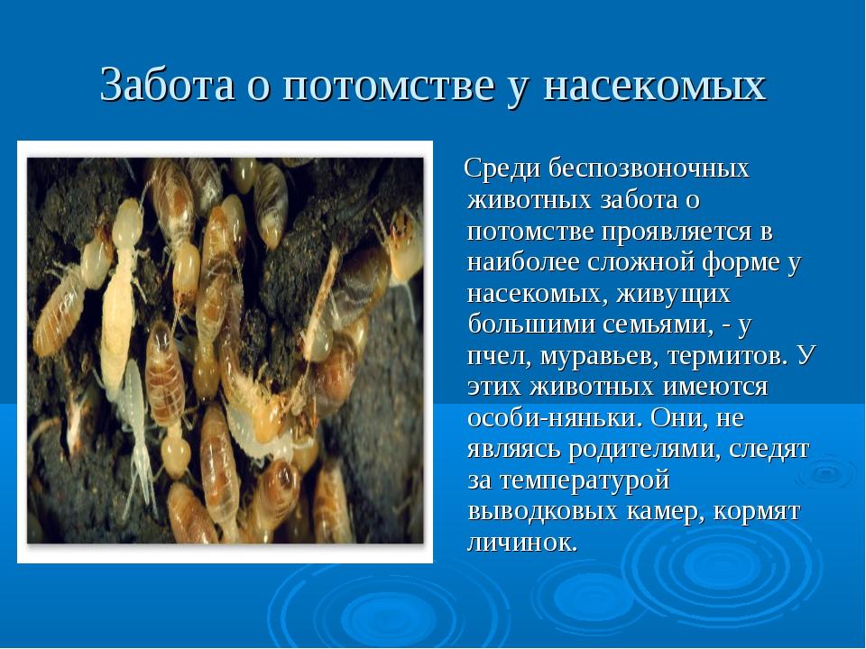 Забота о потомстве у насекомых Среди беспозвоночных животных забота о потомст...