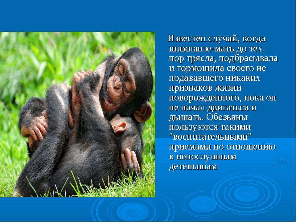 Известен случай, когда шимпанзе-мать до тех пор трясла, подбрасывала и тормо...