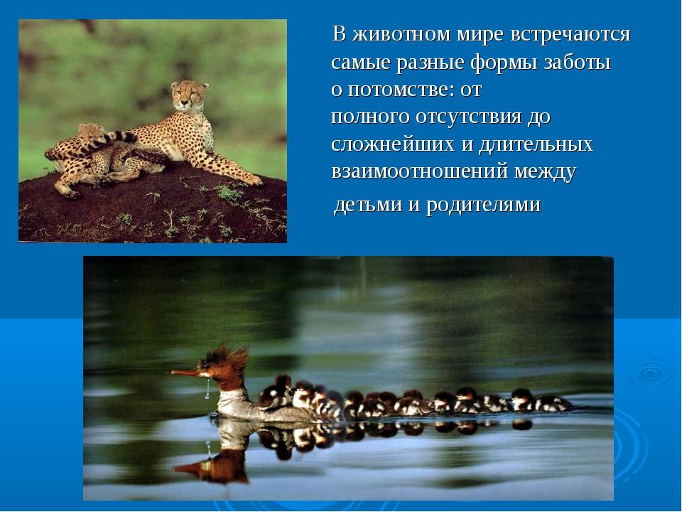 В животном мире встречаются самыеразные формызаботы опотомстве: от полно...