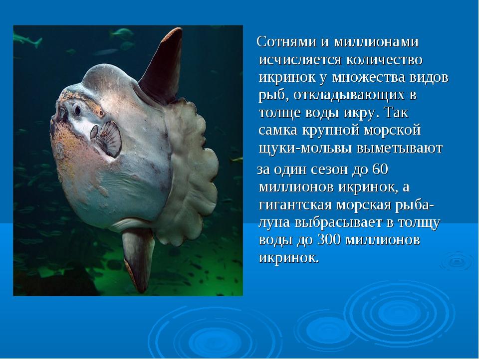 Сотнями и миллионами исчисляется количество икринок у множества видов рыб, о...