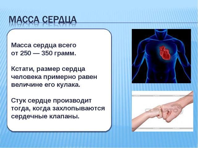 Масса сердца всего от 250 — 350 грамм. Кстати, размер сердца человека пример...