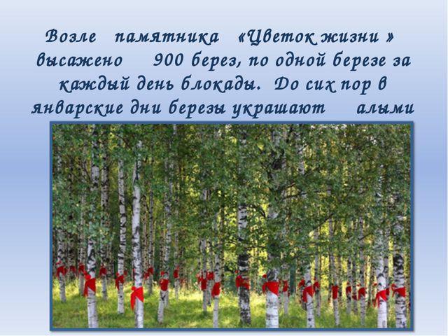 Возле памятника «Цветок жизни » высажено 900 берез, по одной березе за каждый...