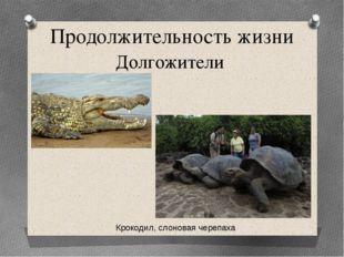 Продолжительность жизни Долгожители Крокодил, слоновая черепаха