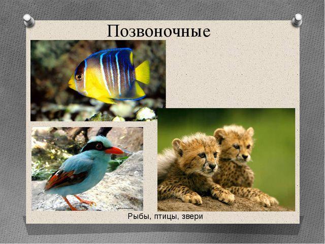 Позвоночные Рыбы, птицы, звери