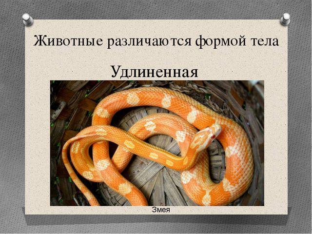 Животные различаются формой тела Удлиненная Змея