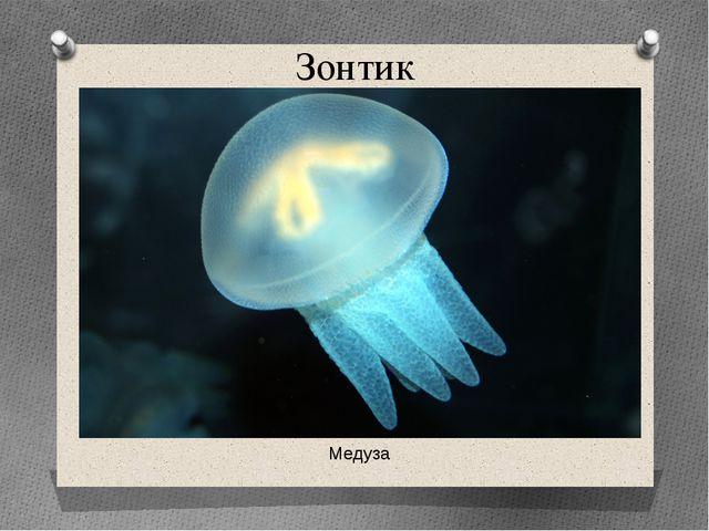 Зонтик Медуза