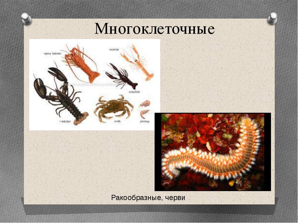 Многоклеточные Ракообразные, черви