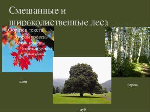 Смешанные и широколиственные леса клен береза дуб